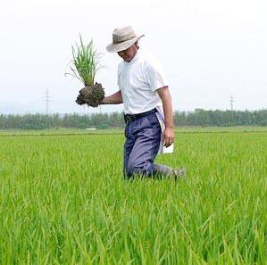 喜巳夫(キミオ)の稲作相談